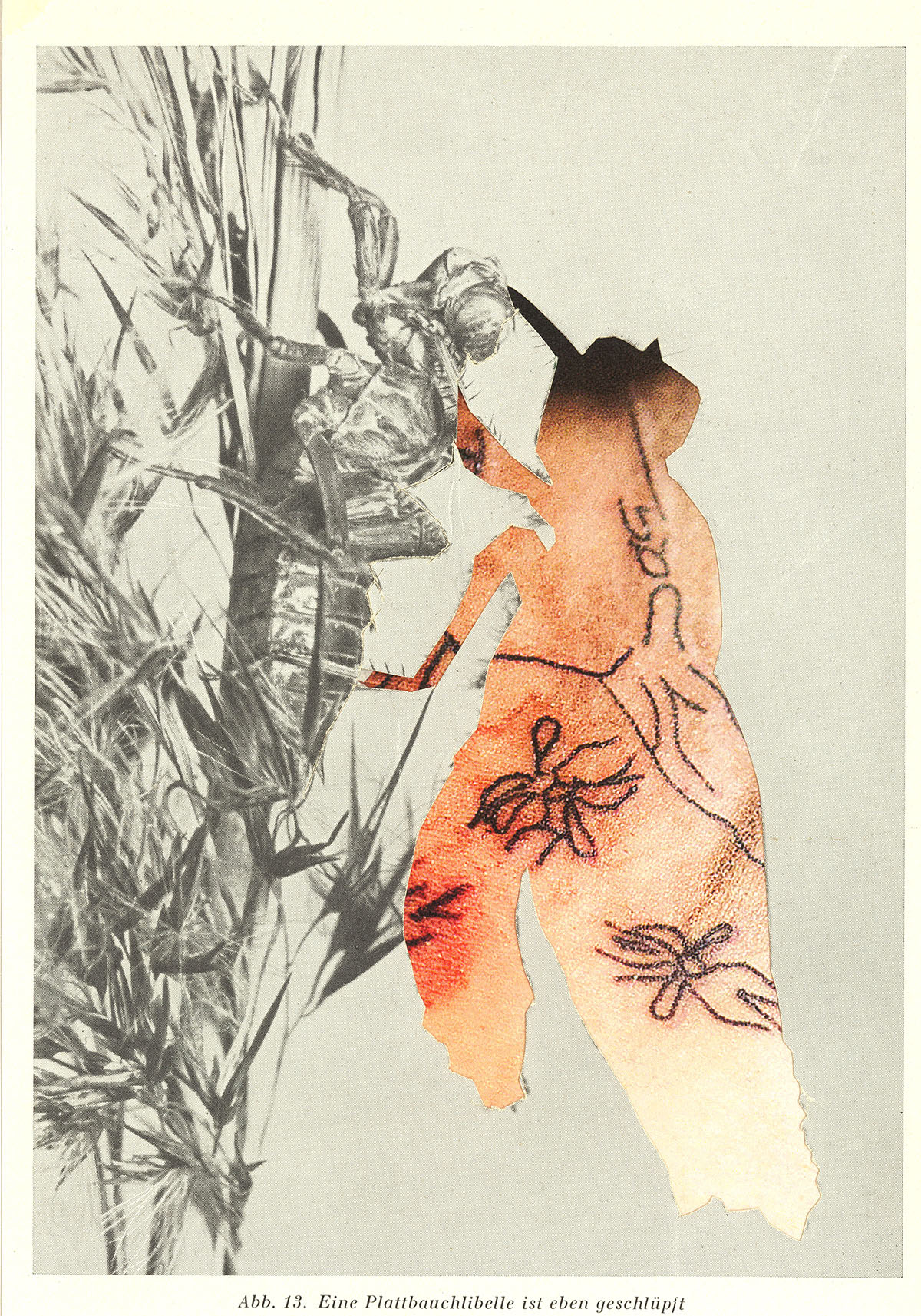 """o.T. aus """"Endemisches Kollegium"""", 2014, 14,9 x 11,5 cm, Collage auf Karton"""