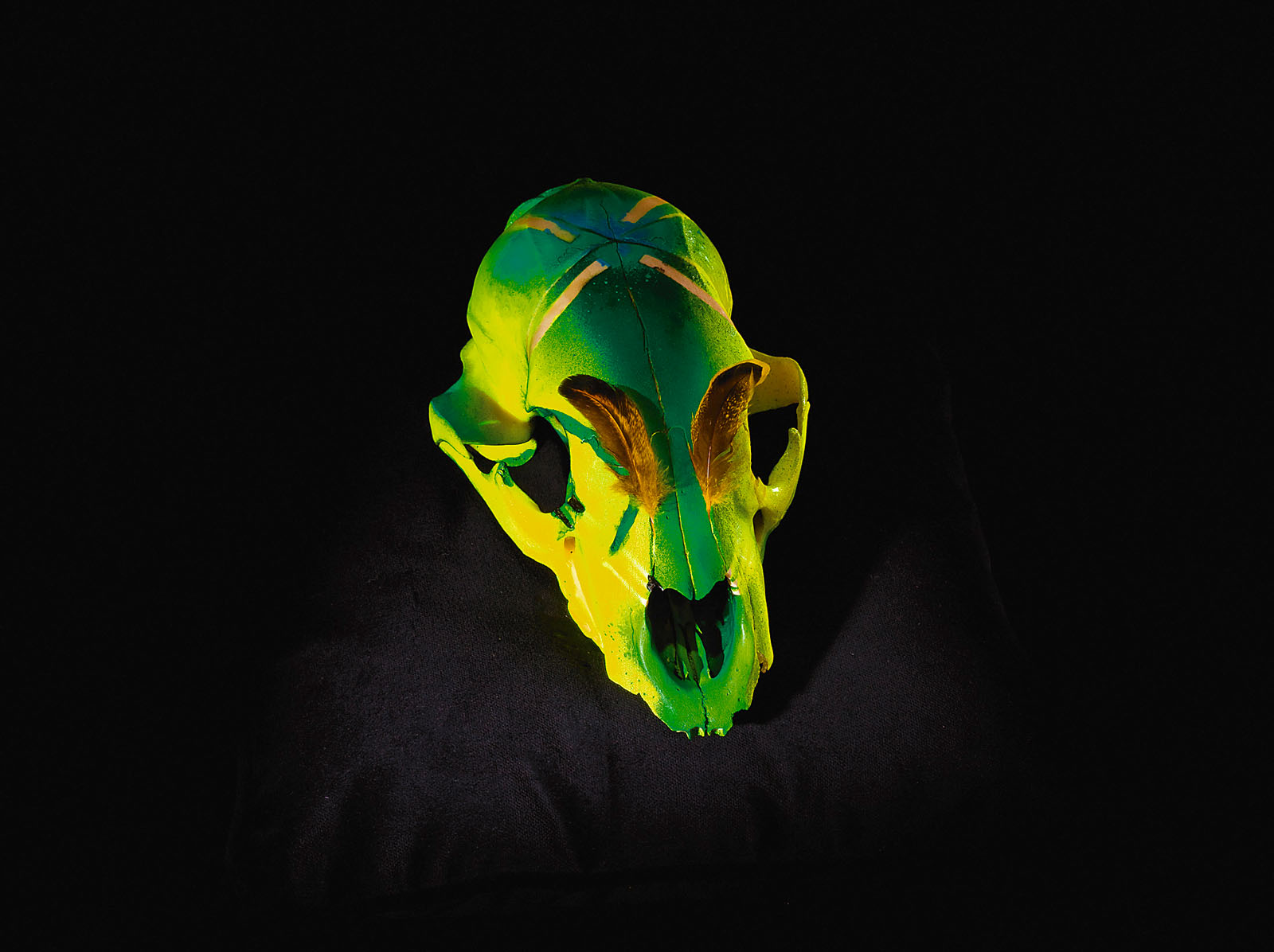 "o.T. aus ""Soft Skulls"", 2010, Bärenschädel, diverse Materialien"